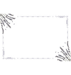 Card frame with lavender flowers on a white vector