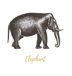 elephant hand drawing vector image