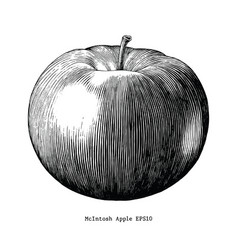 mcintosh apple hand draw vintage clip art vector image