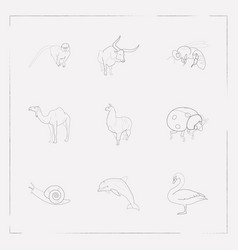 set of zoo icons line style symbols with dolphin vector image