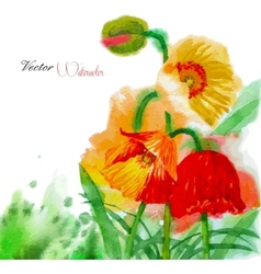 Watercolor background with poppy and flowers vector image