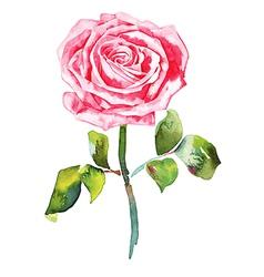 hand draw ornate romantic watercolor rose vector image