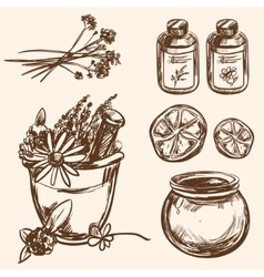 Ayurveda Hand drawn Set vector image