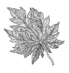 hand drawn outline leaf vector image