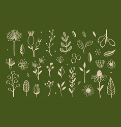 herbal tea and floral doodle set 2 vector image