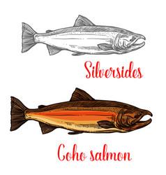 coho salmon fish sketch of marine animal design vector image vector image