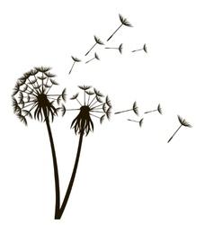 Dandelion Fluffy Flower and Seeds vector image