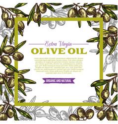 Olive oil label with green fruit and leaf frame vector