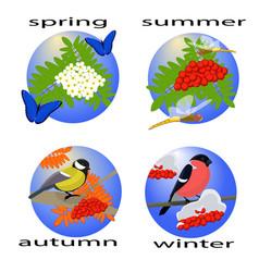 Four seasons with rowan tree vector