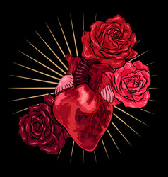 human heart with red roses on black background vector image
