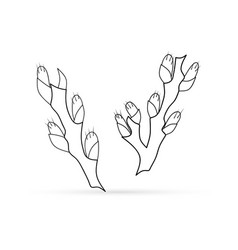 Outline willow set icon isolated vector