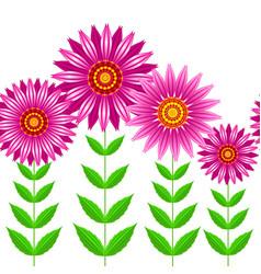 seamless of echinacea purpurea flowers vector image