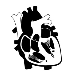 function and definition human heart silhouette vector image