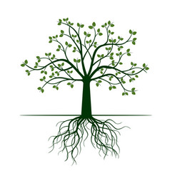 green tree with roots vector image