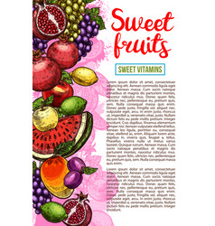 fruit and berry banner with natural farm product vector image vector image