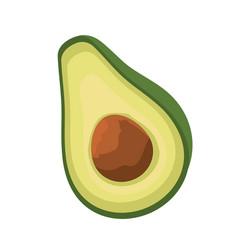 Avocado half cut fruit isolated vector