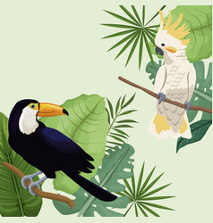 cockatoo and toucan leaves tropical poster vector image