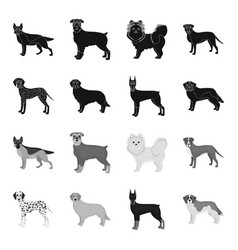Dog breeds blackmonochrome icons in set vector