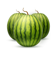 realistic watermelon fruit 3d vector image