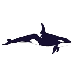 Realistic Killer Whale on a white background vector image