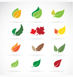 set of color autumn fallen leaves on white vector image