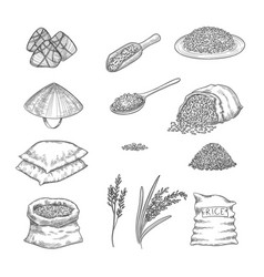 doodle rice agricultural nature collection of vector image