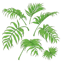 Green palm fronds sketch vector