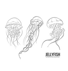 jellyfish outline hand-drawn doodle marine sketch vector image
