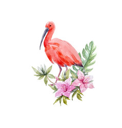 Watercolor ibis bird composition vector