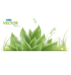 green leaves and dragonfly vector image vector image