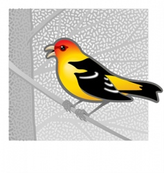 Western tanager vector