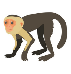 capuchin icon cartoon style vector image