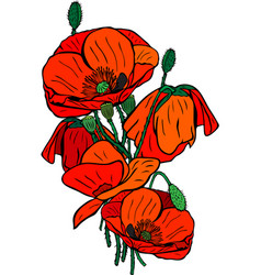 hand-drawn bouquet of blooming red poppies with vector image