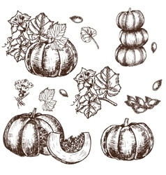 Hand drawn set sketch pumpkin leaves vector