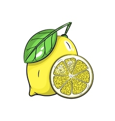 lemon on white background vector image