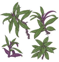 spiderwort branches sketch vector image vector image