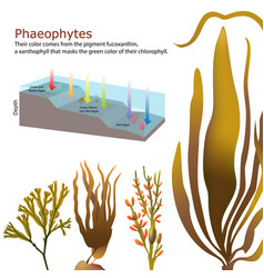 Underwater algae seaweed elements vector