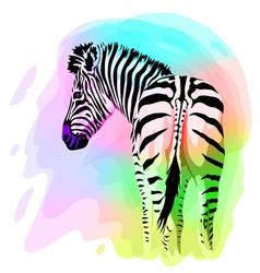 Rainbow Zebra portrait Watercolor imitation vector image vector image
