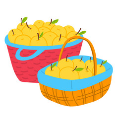 Apples in wicker basket harvesting fruit vector