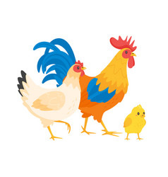 Chicken family hen rooster vector