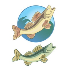 fish bass vector image
