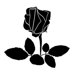 Black rose - silhouette vector