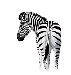 Body of a zebra with a tail vector image