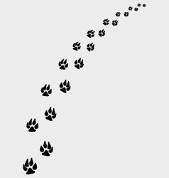 Dogs footprints vector