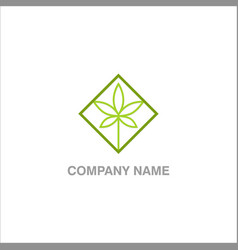 green leaf marijuana logo vector image