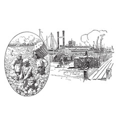 Picking and loading cotton vintage vector