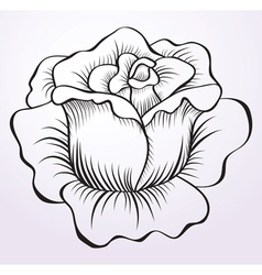 Rose drawing vector