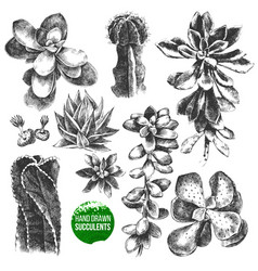 hand drawn set of cactuses and succulents vector image