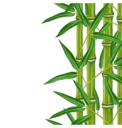 Seamless border with bamboo plants and leaves vector image