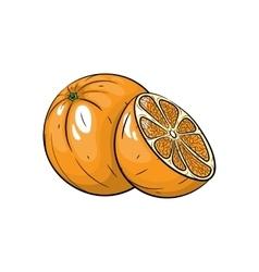 orange on white background vector image